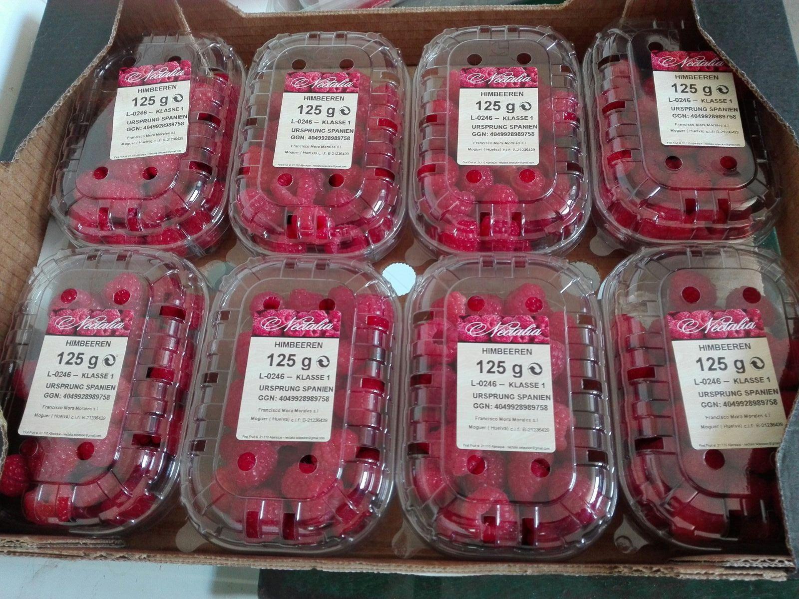 almacen-berries-2