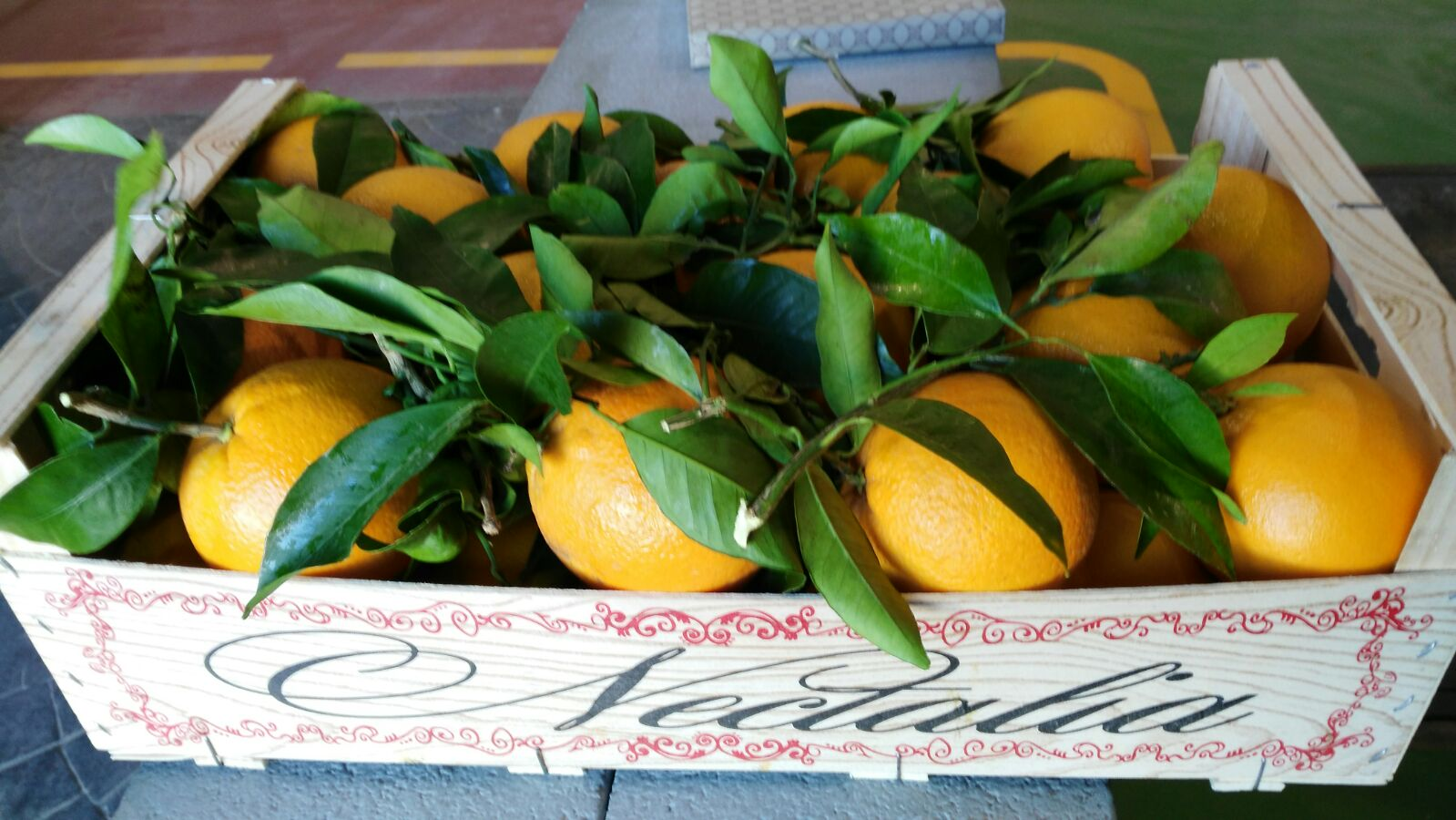 almacen-citricos-4