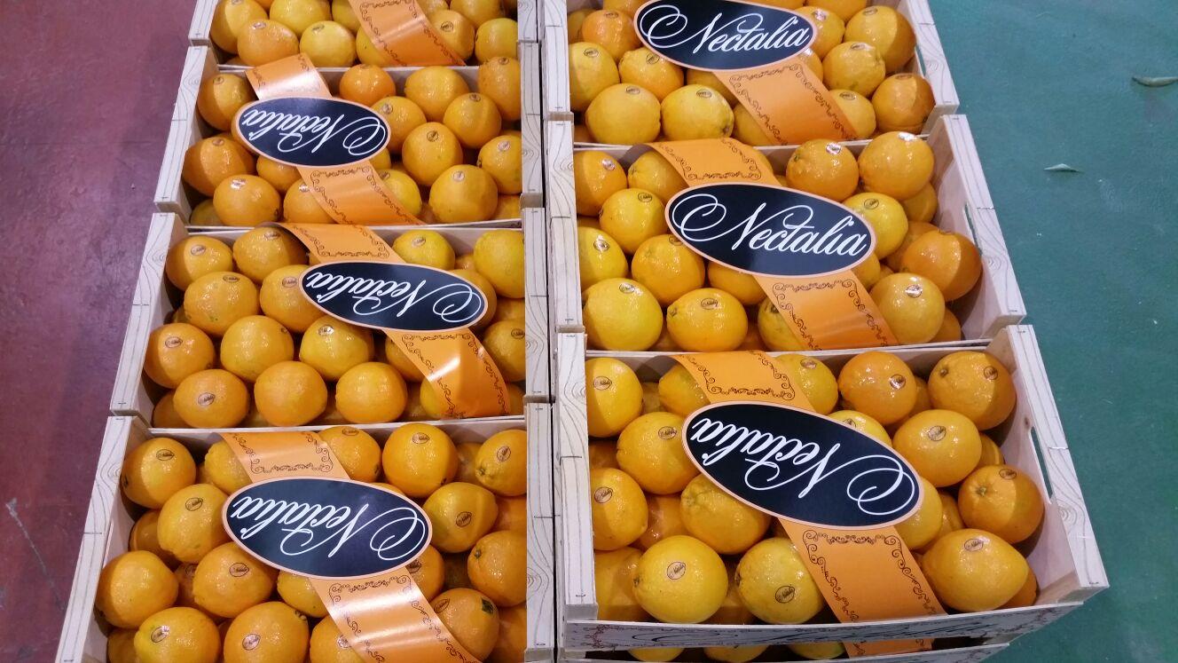 almacen-citricos-5