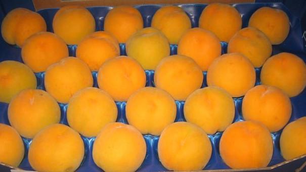 meloc-amarillo-2
